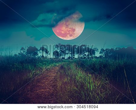 Landscape At Night Time In The Forest With Fogy And Darkness Sky Super Blood Moon In The Background,