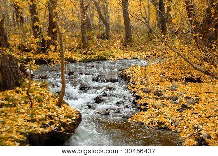 Fall McGee Creek