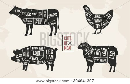Set Of Meat Diagrams. Cuts Of Meat. Cow, Chicken, Pig And Sheep Silhouette. Vintage Posters For Groc