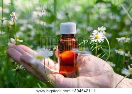 Essential Herbs, Oil And . Camomile - Natural Healing Oil. Camomile Flowers.