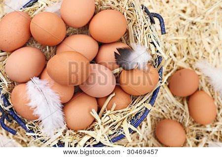 Fresh Organic Farm Eggs