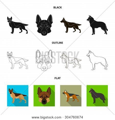 Vector Design Of Sheepdog And Sheltie Icon. Set Of Sheepdog And Shepherd Stock Symbol For Web.