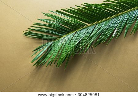 Beautiful Feathery Green Palm Leaf On Light Brown Beige Wall Background. Sunlight Harsh Shadows. Sum