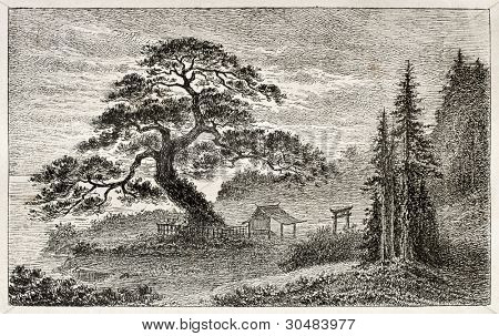 Holy Cedar in Yedo (Tokyo) suburb, old view. Created by Lancelot after Japanese engraving by unknown author, published on Le Tour Du Monde, Ed. Hachette, Paris, 1867