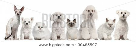 Group of dogs and cats sitting in front of white background