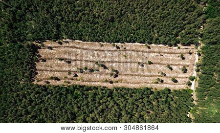 Illegal Cutting Of Forest, Empty Forest Glade Aerial Photography With Drone