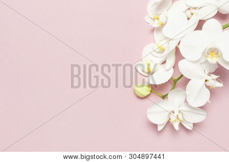 Beautiful White Phalaenopsis Orchid Flowers On Pastel Pink Background Top View Flat Lay. Tropical Fl
