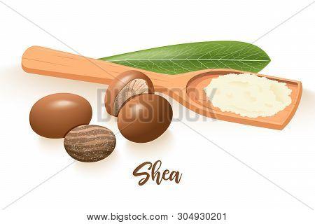 Ripe Shea Nuts Leaf Vector Photo
