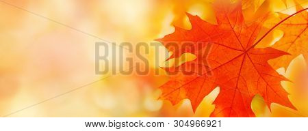 Colorful Maple Leaves Close-up On The Blurry Background. Bright Autumn Foliage Background. Fall Pano