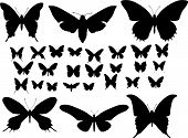 Many silhouettes of butterflies of different types poster
