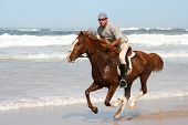 Galloping brown horse and rider at the beach poster