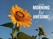 Morning inspirational motivational quote- Good morning, be awesome. With a beautiful smiling sunflower blossom and blue sky background at a bright sunny day. poster
