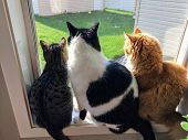 Three cats sitting together on a window sill looking out the window into the backyard.One cat is grey and brown, one cat is black and white, one cat is orange. They are all different colors and sizes t-shirt
