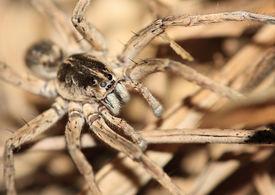 Boden-Spider