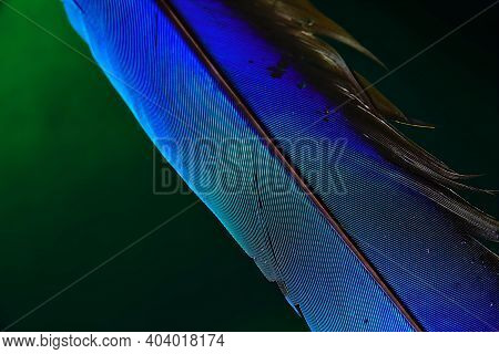 Macaw Parrot Blue Feathers On Isolated Green Backgound