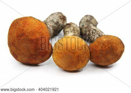 Orange Birch Bolete Isolate On A White Background. Three Whole Edible Mushroom On White Background.