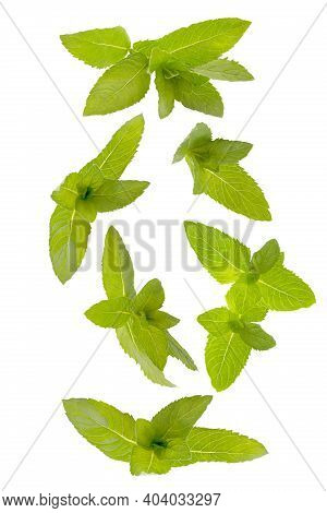 Set Of Flying Fresh Bunches Of Mint Leaves Isolated On White Background