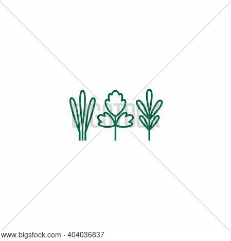 Parsley, Sage And Thyme. Set Of White Line Twigs, Shoots, Sprigs Isolated On White. Agriculture, Nat