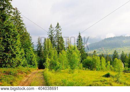 Carpathian Forest In Summer. Carpathian Mountains, Ukraine
