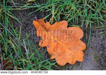 Dry autumn leaf on ground among green grass