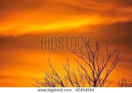 Fiery red sky and treetop