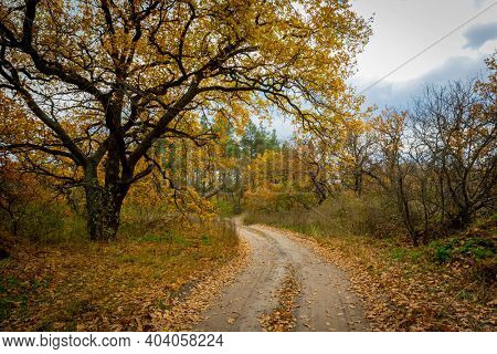 Autumn landscape with rut road bend in forest