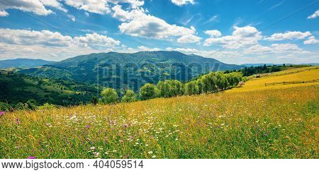 Rural Landscape With Blooming Grassy Meadow. Beautiful Nature Scenery Of Carpathian Mountains On A S