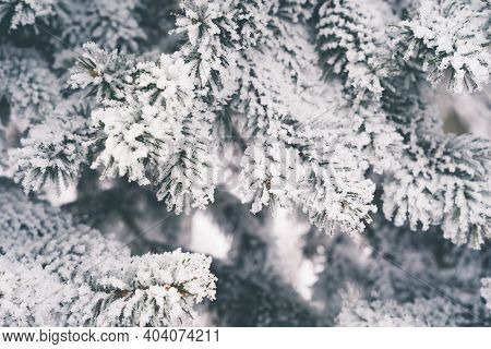 Beautiful Pine Tree Needles Covered In Winter Rime Ice