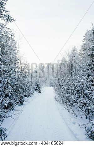 Beautiful Atmospheric Winter Landscape. Snow Covered Trees In The Forest. Winter Nature Background.