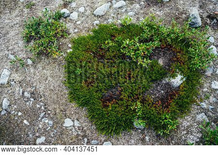 Beautiful Nature Background With Wild Flora Of Mountains Close-up. Natural Backdrop With Green Rich