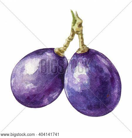 Black Grape Berries Watercolor Image. Realistic Ripe Organic Purple Grape Element. Delicious Dark Vi