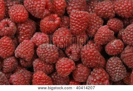 The red raspberries