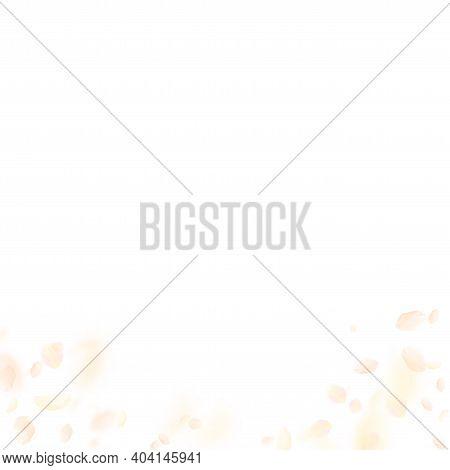 Yellow Orange Flower Petals Falling Down. Uncommon Romantic Flowers Gradient. Flying Petal On White