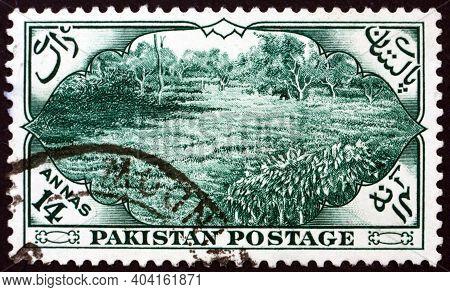 Pakistan - Circa 1954: A Stamp Printed In Pakistan Shows Tea Garden, East Pakistan, Circa 1954