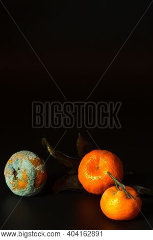 Spoiled Fruit On A Black Background. Tangerines With Varying Degrees Of Rot, Close-up. The Concept O