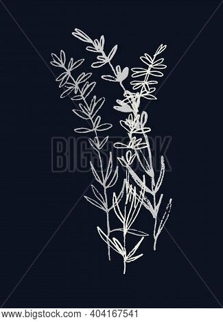 Lavender Flowering Plant. Realistic Line Art. Hand Drawn Monochromatic Vector Illustration. Isolated