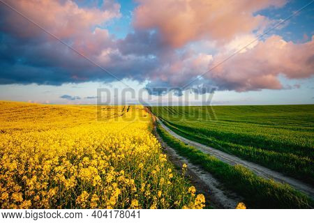 Majestic yellow rapeseed field and cultivated land on a sunny day. Location place of Ukraine agricultural region, Europe. Ecology concept. Agrarian industry. Vibrant photo wallpaper. Beauty of earth.