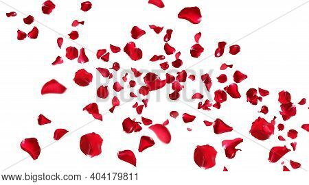Floating Red Rose Petals Isolated Animation On White Background. Romantic Concept For Love, Valentin