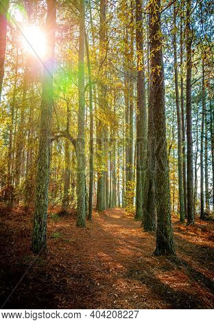 Magical woodland path with sunshine shinning through trees