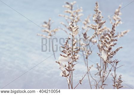 Beautiful White Winter Scenery With Frozen Plants