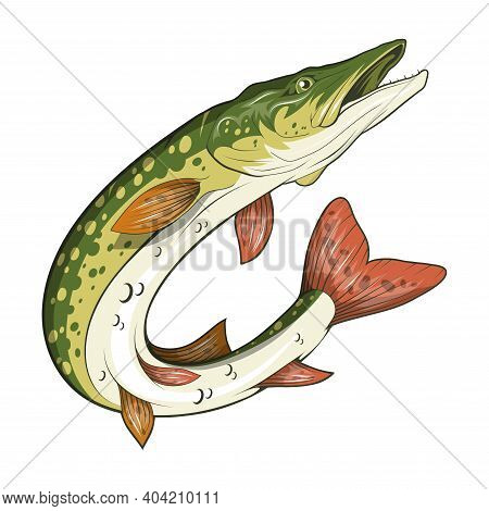 Pike Image. Northern Pike. Fish Monster. Sketch For Mascot, Logo Or Symbol. Pike Fishing. Sport Fish