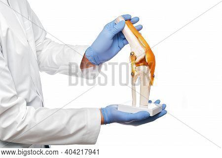 Doctor Holds An Anatomical Human Knee-joint Model In His Hands, Close-up. Isolated On White Backgrou