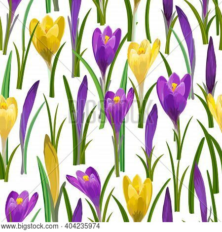Colored Pattern With Multi-colored Crocuses.multicolored Crocuses On A White Background In A Seamles