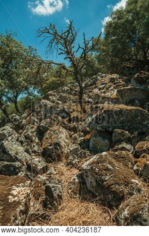 Trees And Dry Bushes On A Rocky Hill Slope Covered By Moss, In A Sunny Day At The Monfrague National