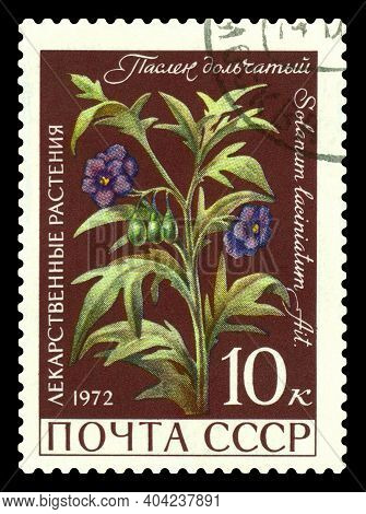 Stavropol, Russia - January  20. 2021: A Stamp Printed In Ussr Shows  Lobular Nightshade, Medicinal