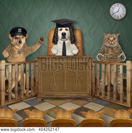 A Dog Policeman Testifies At A Court Hearing. A Judge, A Criminal And A Jury Listen To Him Carefully