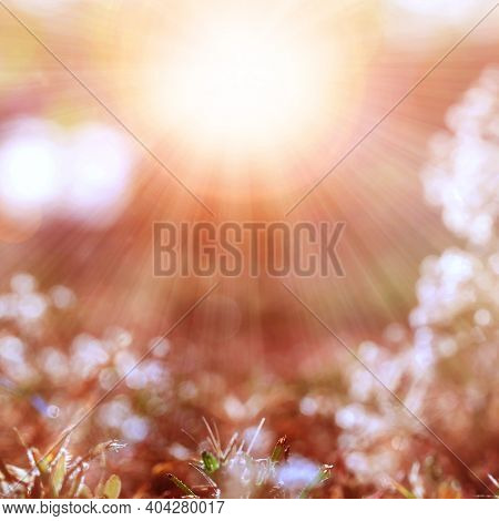Blurred Gentle Natural Background. Natural Elements Concept. Background For Text, Design, Background