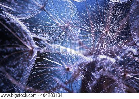 Abstract Natural Blurred Background. Fantastic Blue And Purple Background. Abstract Macro Photo Of A