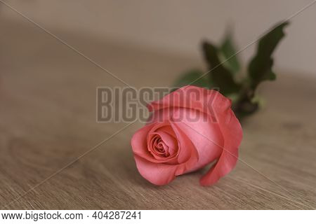 One Rose Is Lying On A Wooden Table. Place To Copy Text