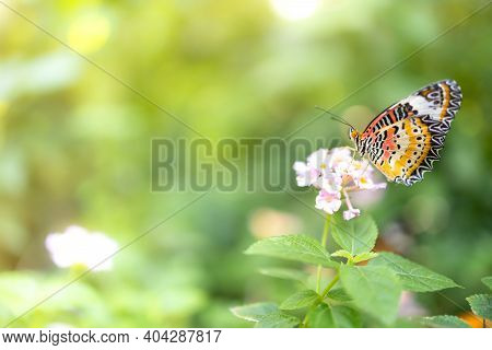 Butterfly On Pink Flower In Garden Against Green Blur Background And Sunlight With Copy Space Using